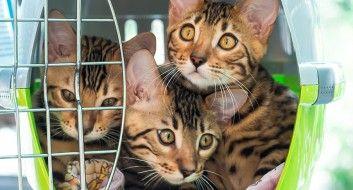 Reinigung nach bzw. bei Animal Hording
