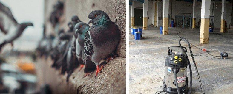 Taubenkot entfernen – Reinigung und fachgerechte Desinfektion sowie Entsorgung des Taubenkots durch Silent Clean