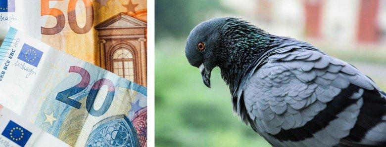 Taubenkot entfernen – Kosten und Preise